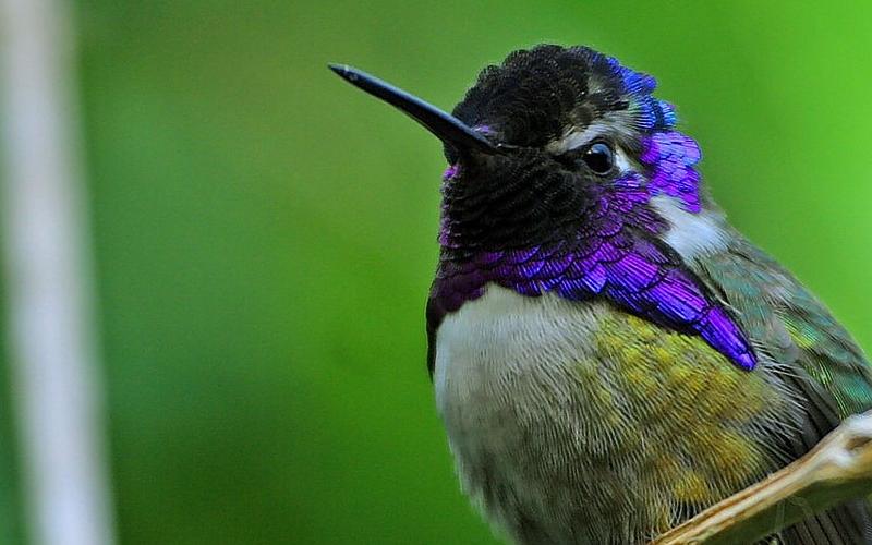 How do hummingbirds sleep