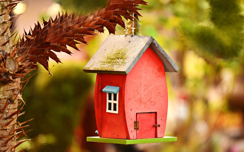 Should bird houses be cleaned out