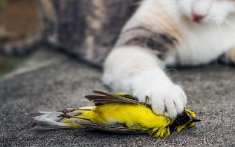 Deadlt Threats to backyard birds