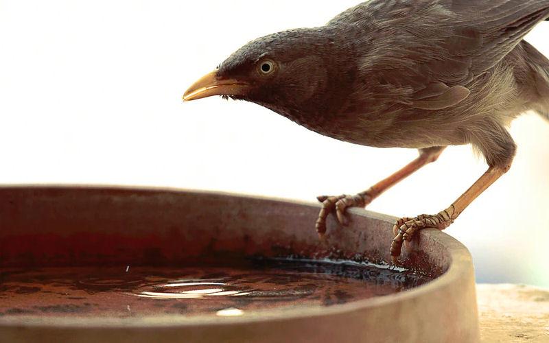 Bird bath in winter