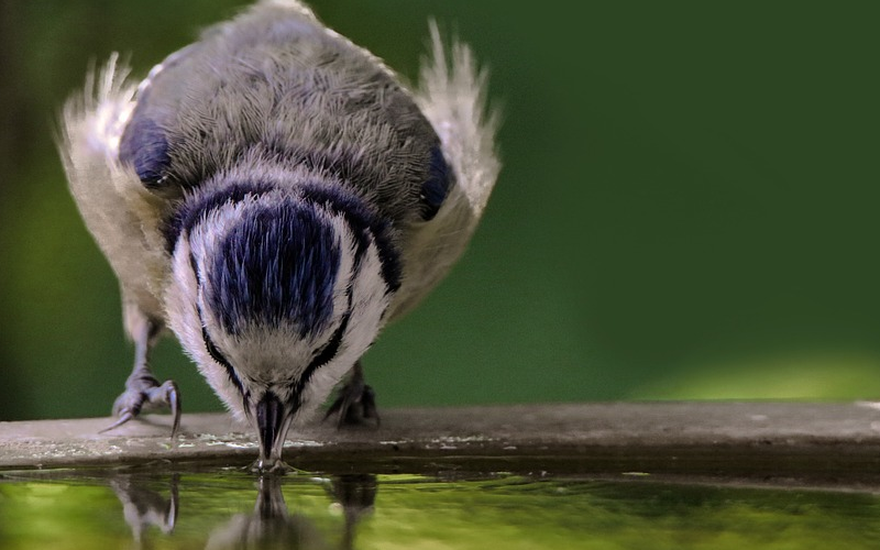 How To Keep A Bird Bath From Freezing in winter