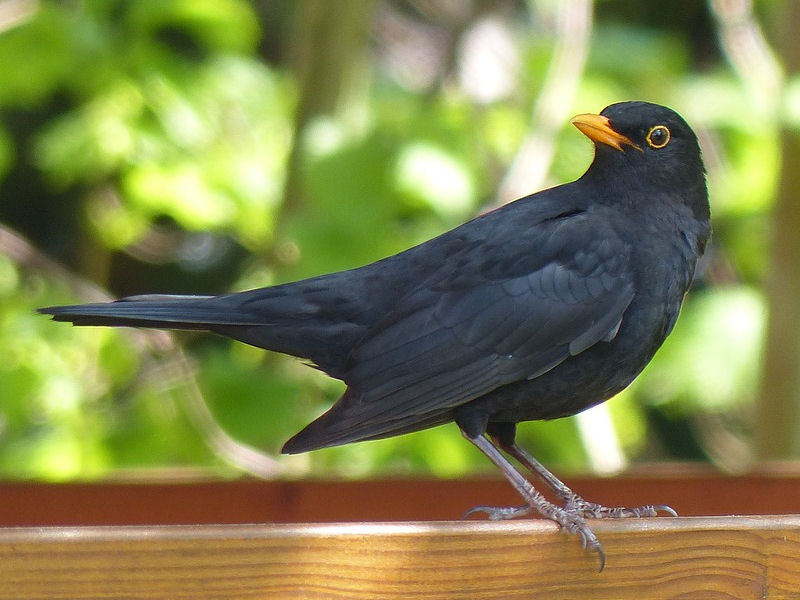 How To Keep Blackbirds Away From Your Feeders