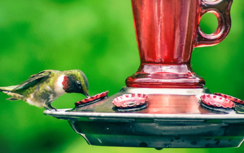 What to put in a hummingbird feeder