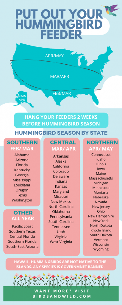 When to put out your hummingbird feeders infographic