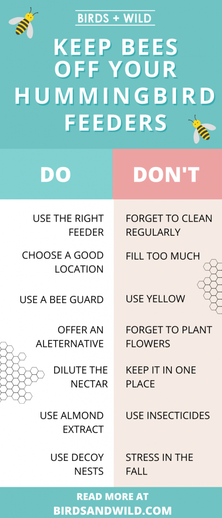 How To Keep Bees Away From Hummingbird Feeder Infographic