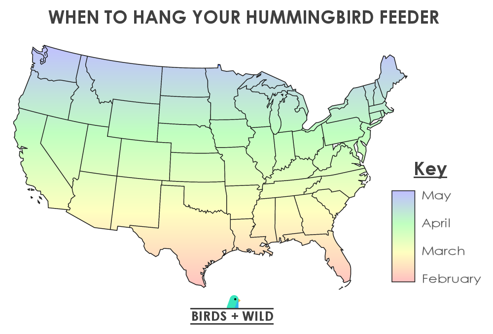 When To Put Out A Hummingbird Feeder by Month
