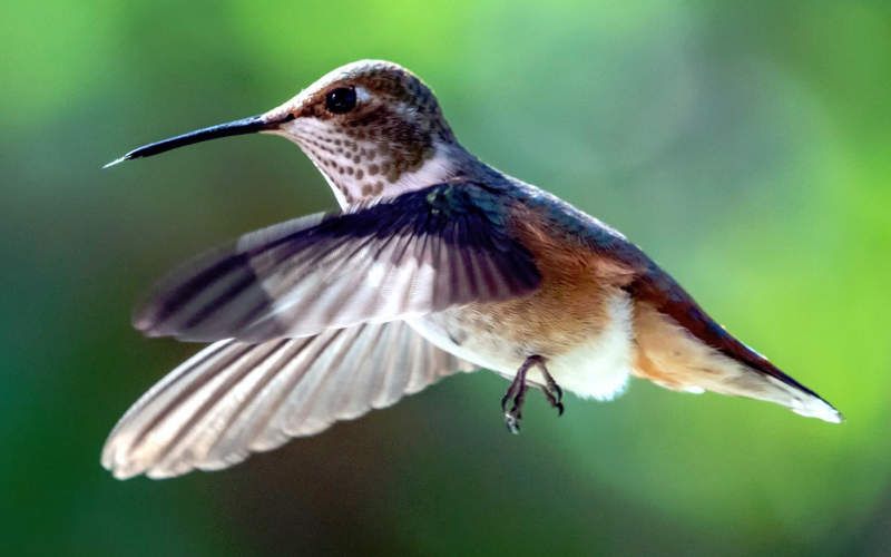 when to take down hummingbird feeders in winter