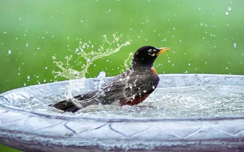 Where to put a bird bath in your yard