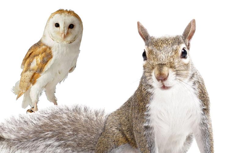 are squirrels afraid of owls