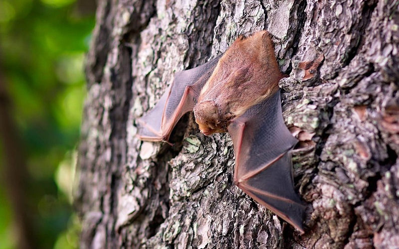 Why are bats important 9 benefits of bats