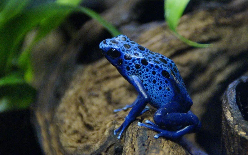 are frogs poisonous