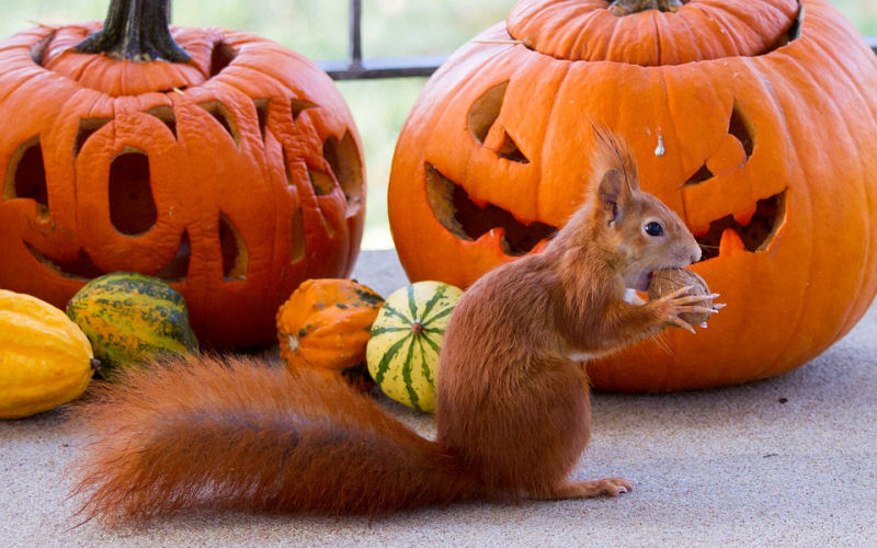 How To Keep Squirrels From Eating Pumpkins