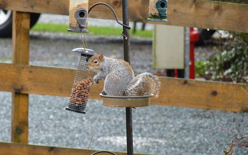 What Animals Eat Bird Seed at Night
